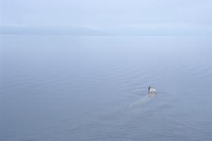 支笏湖の静寂の素材 [FYI00481252]