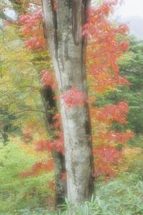 ツタの葉からむ大樹の素材 [FYI00481254]