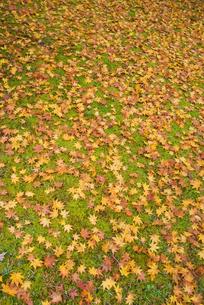 御殿場市・平和公園の落ち葉の絨毯の素材 [FYI00481333]