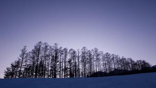 乗鞍高原・夕照のカラマツ林の写真素材 [FYI00481362]