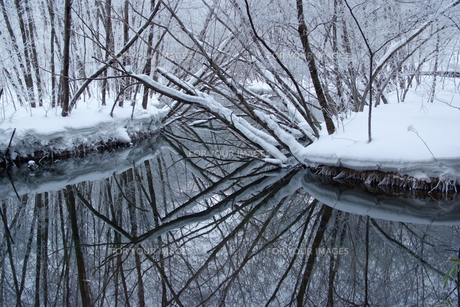 冬の上高地・倒木の森の素材 [FYI00481379]