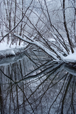 冬の上高地・倒木の森の素材 [FYI00481382]