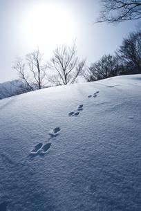 新潟県谷川連峰・タカマタギ山・雪のあしあとの素材 [FYI00481402]