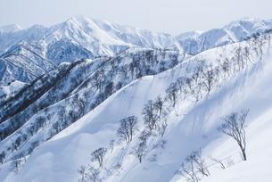 新潟県谷川連峰・タカマタギ山から望む上越の冬山の写真素材 [FYI00481411]