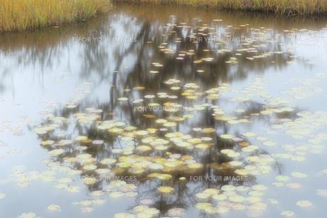 淡き池塘の光の素材 [FYI00481449]