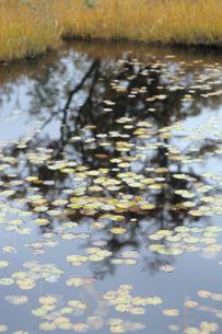池塘の浮舟の素材 [FYI00481451]