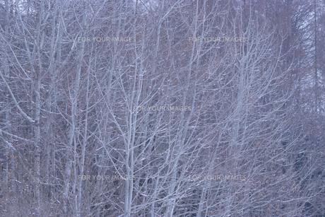 淡い色合いの森の素材 [FYI00481480]
