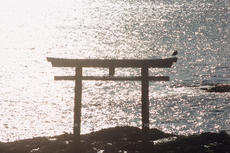 輝く海と鳥居の素材 [FYI00481481]