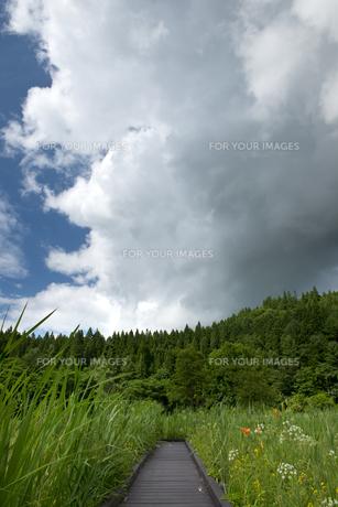 親海湿原と夏雲の素材 [FYI00481502]