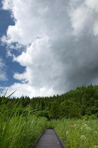 親海湿原と夏雲の写真素材 [FYI00481502]