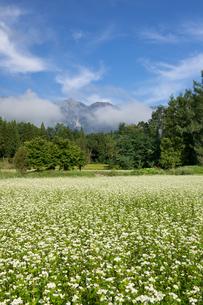 ソバの花と白馬三山の写真素材 [FYI00481517]