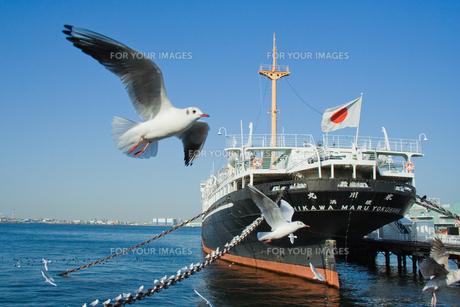 氷川丸とカモメの写真素材 [FYI00481553]