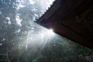 大雄山最乗寺の光芒の素材 [FYI00481563]