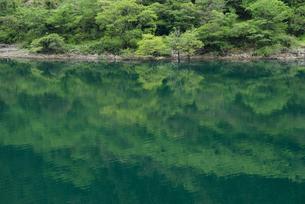 緑豊かな四国の川の写真素材 [FYI00481589]