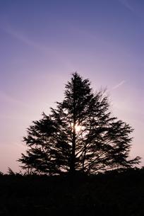 夕暮れの木立の素材 [FYI00481592]