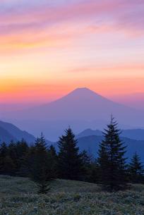 山伏山頂から見る未明の富士山の写真素材 [FYI00481600]