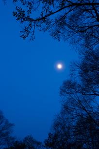 月明かりと尾瀬ヶ原の森の素材 [FYI00481648]