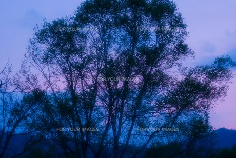 夕照の尾瀬ヶ原の森の素材 [FYI00481649]