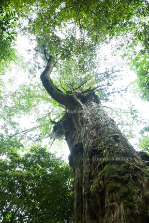 屋久島の深き森の素材 [FYI00481683]