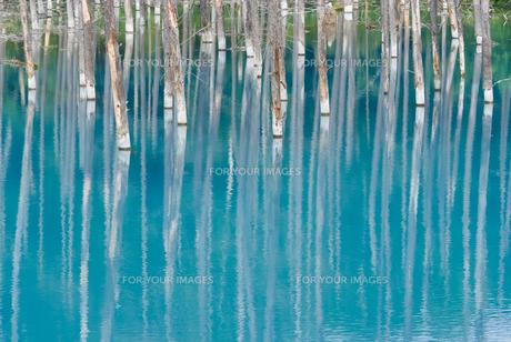 美瑛町・青い池の素材 [FYI00481860]