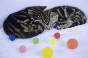 お昼寝の子猫たちの写真素材 [FYI00482033]