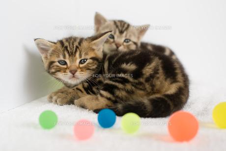 かわいい子猫の素材 [FYI00482057]