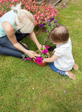 Family plant flowers in the gardenの写真素材 [FYI00482986]