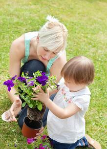 Family plant flowersの写真素材 [FYI00482989]