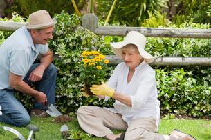 Mature couple working in the gardenの写真素材 [FYI00483870]