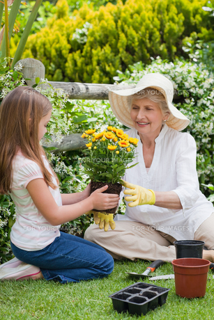 Grandmother with her granddaughter working in the gardenの写真素材 [FYI00483873]