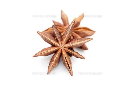Seashellsの写真素材 [FYI00486614]