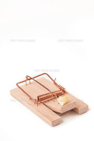 Mousetrap with cheeseの写真素材 [FYI00486633]