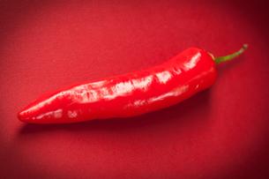 Red long chili pepperの写真素材 [FYI00486644]