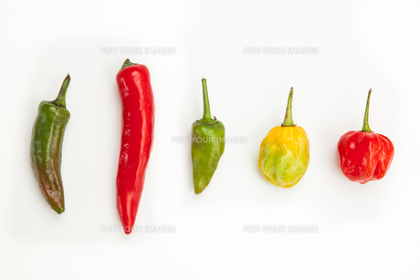 Line up of spicy chilliesの素材 [FYI00486646]