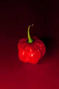 Red chili pepperの写真素材 [FYI00486647]