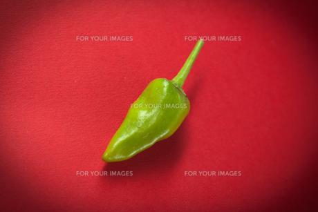 Green chili pepperの写真素材 [FYI00486650]