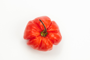 Red chili pepperの写真素材 [FYI00486651]