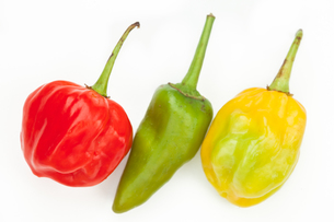 Three chiles in a rowの写真素材 [FYI00486661]