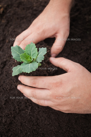 Hands planting a flowerの素材 [FYI00486749]