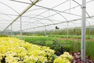 Nursery greenhouseの素材 [FYI00486752]