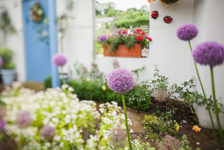 Garden with a lot of flowersの写真素材 [FYI00486753]
