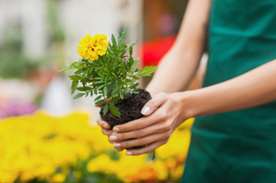 Assistant planting a flower in garden centerの写真素材 [FYI00486756]