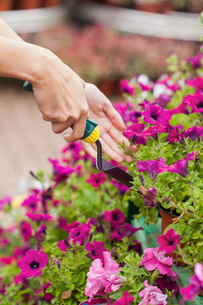 Gardener spading flowersの写真素材 [FYI00486770]