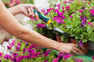 Woman spading flowersの写真素材 [FYI00486772]