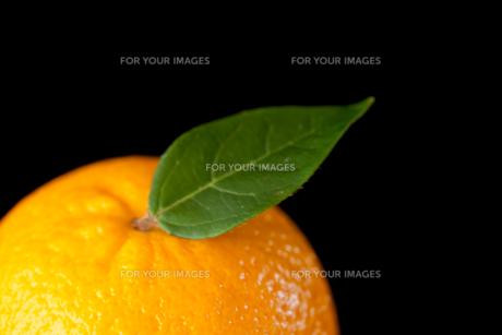 Orangeの素材 [FYI00487022]