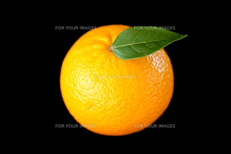 Orange fruitの写真素材 [FYI00487025]