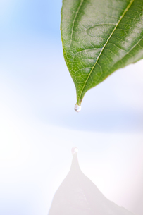 Drop falling from a leafの素材 [FYI00487302]