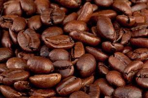 Coffee seeds laid out togetherの素材 [FYI00487346]
