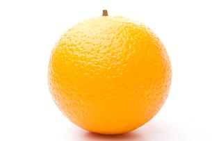 One orangeの素材 [FYI00487373]