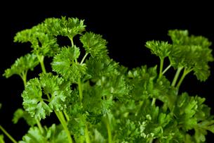 Bunch of parsleyの素材 [FYI00487389]